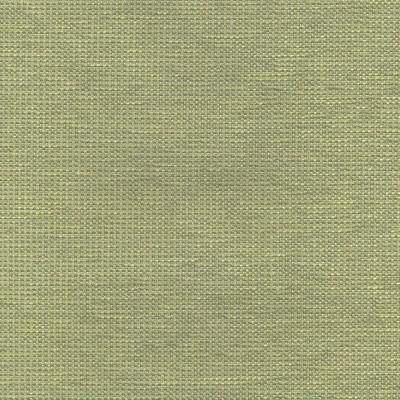 Fuji Kiwi